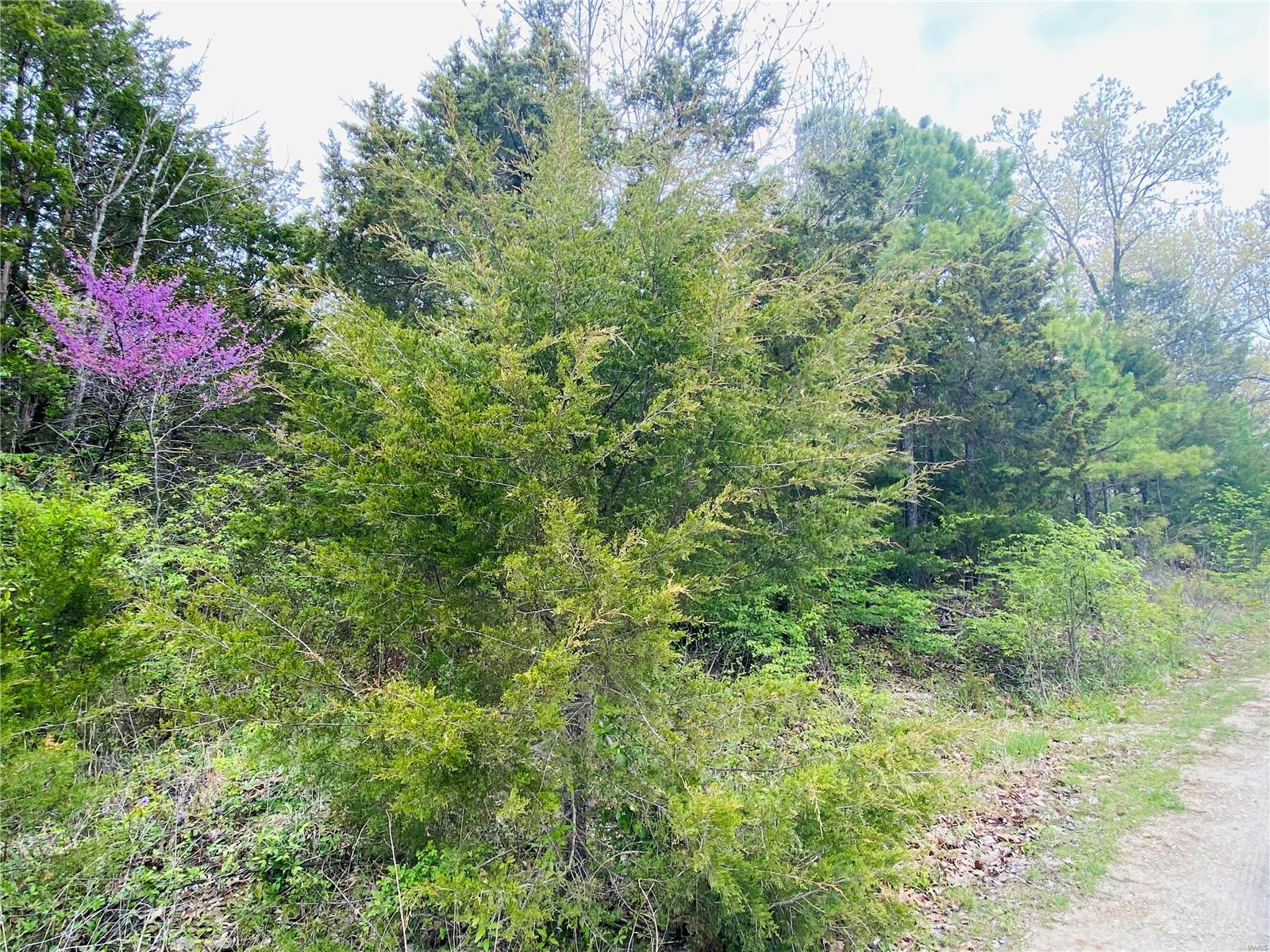 Briarwood Real Estate Listings Main Image