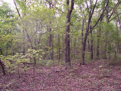 0 W Outer Road Property Photo - Farmington, MO real estate listing