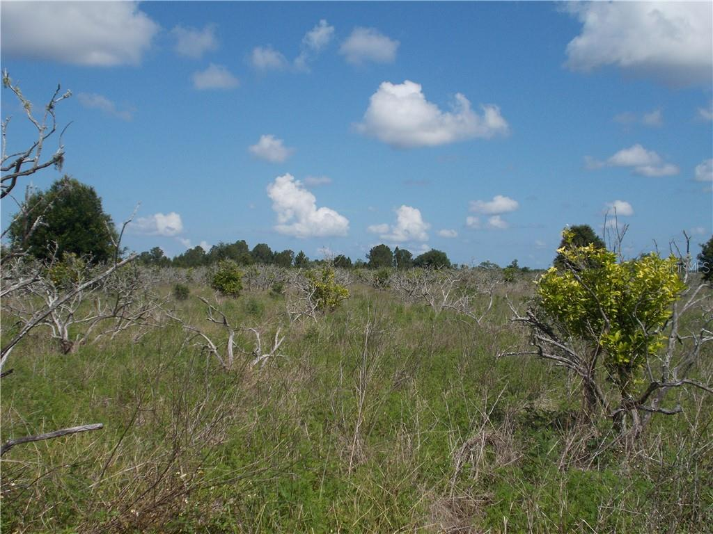 COUNTY ROAD 450 Property Photo - UMATILLA, FL real estate listing