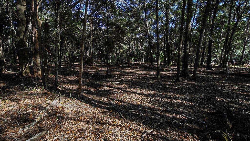 COUNTY ROAD 42 Property Photo - PAISLEY, FL real estate listing