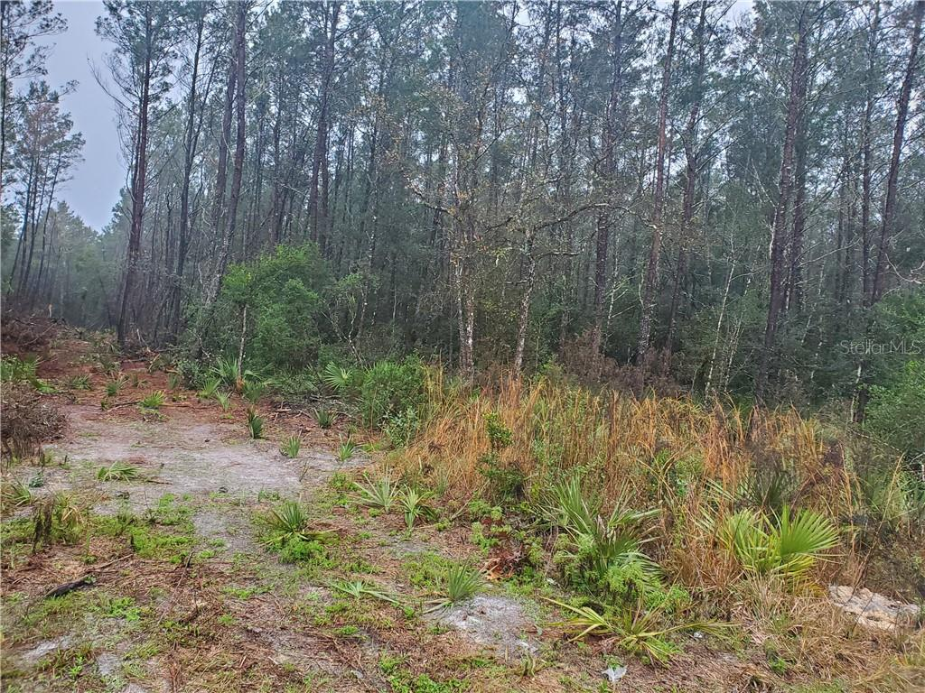 6TH STREET Property Photo - ALTOONA, FL real estate listing