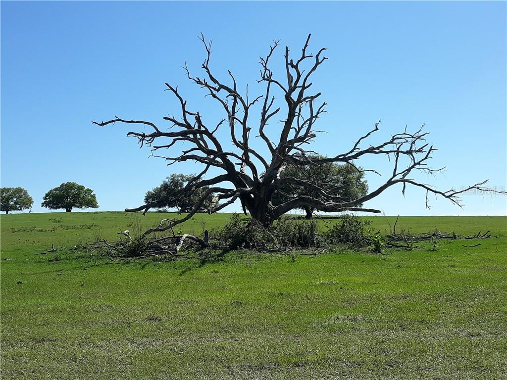Clermont, Fl Real Estate Listings Main Image