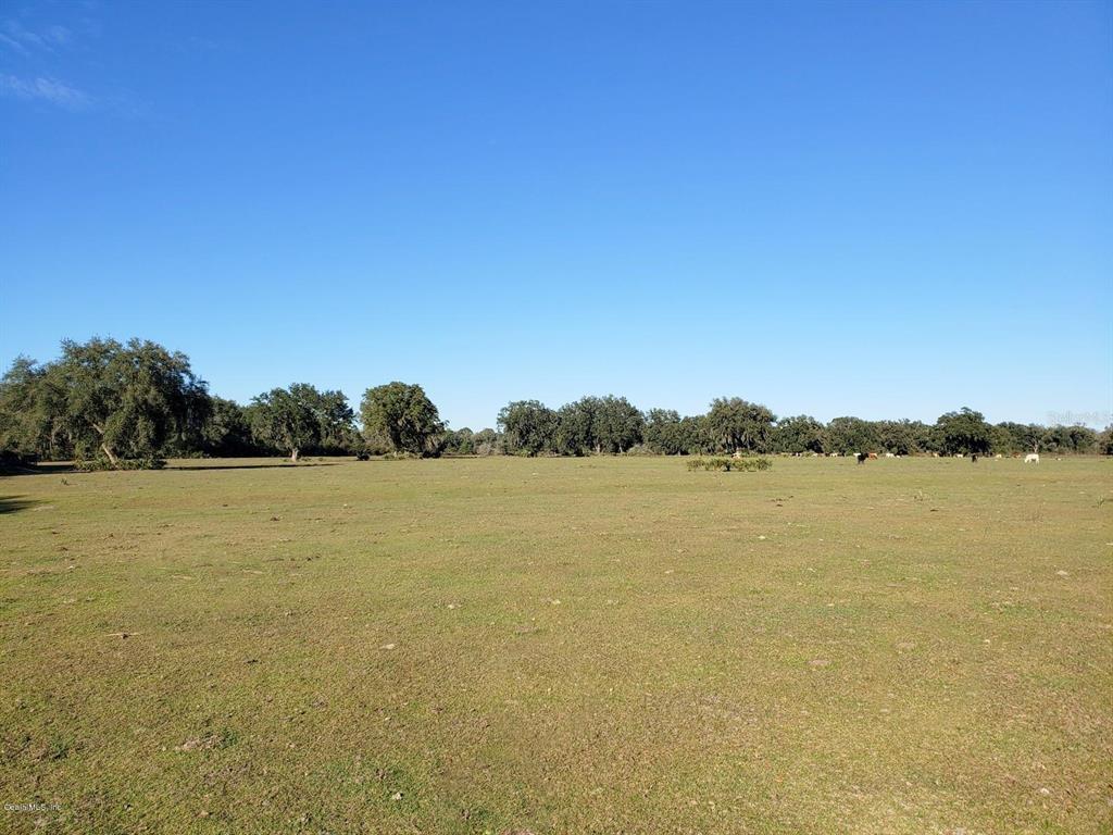 126ac NE 315 Property Photo - FORT MCCOY, FL real estate listing