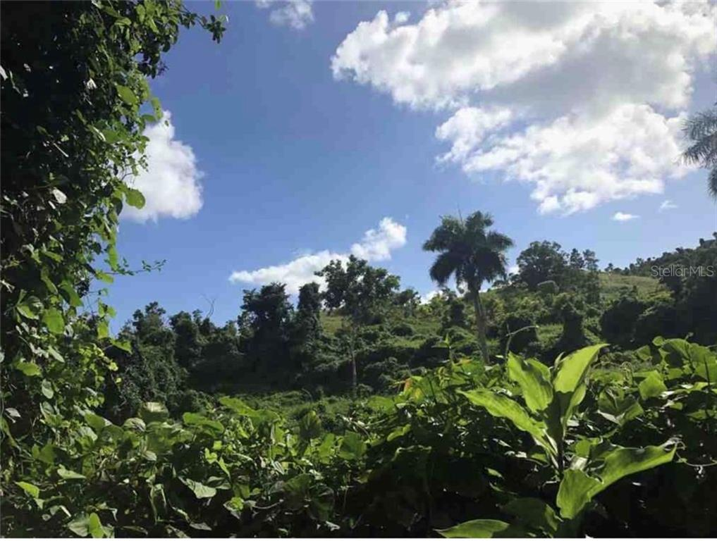 PR-984 km 5.3 POLACOS ST. #Lot 6 Property Photo - FAJARDO, PR real estate listing