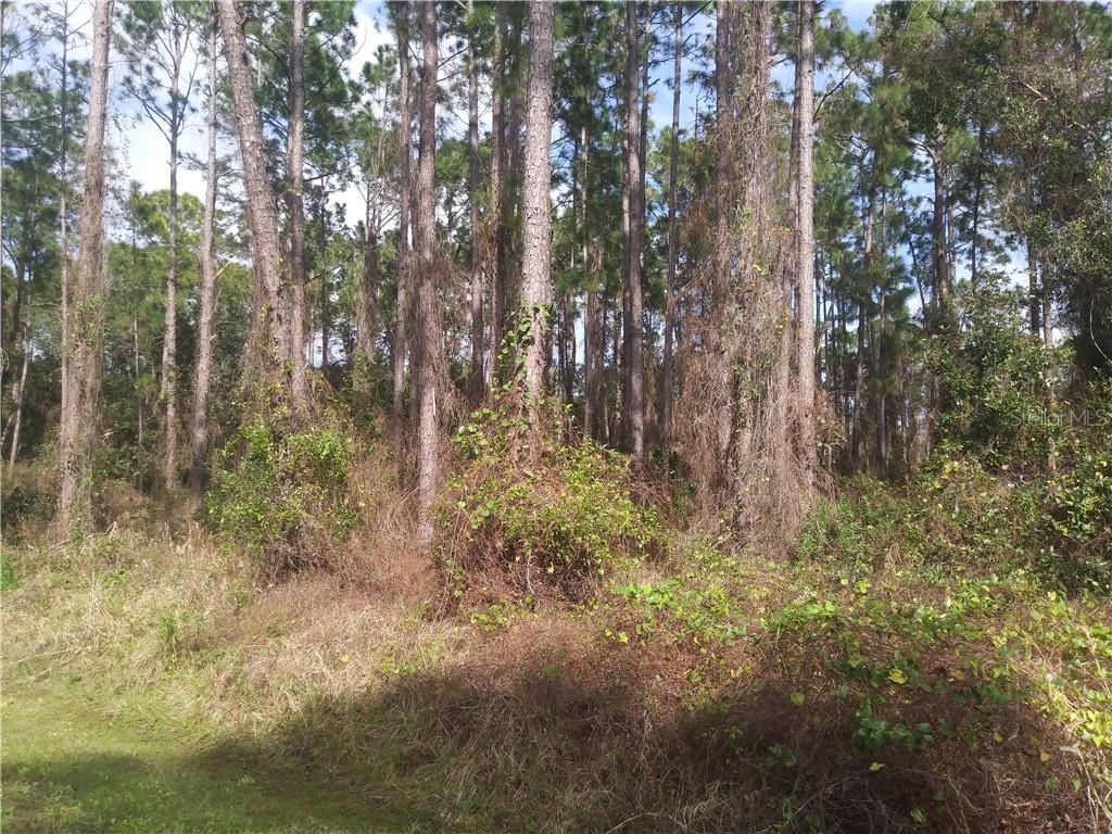 45 SANCTUARY AVE Property Photo - DEBARY, FL real estate listing