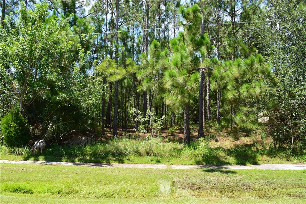 SHINGLE CREEK CT Property Photo