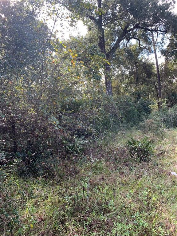 Lot 13 RING NECK ROAD Property Photo