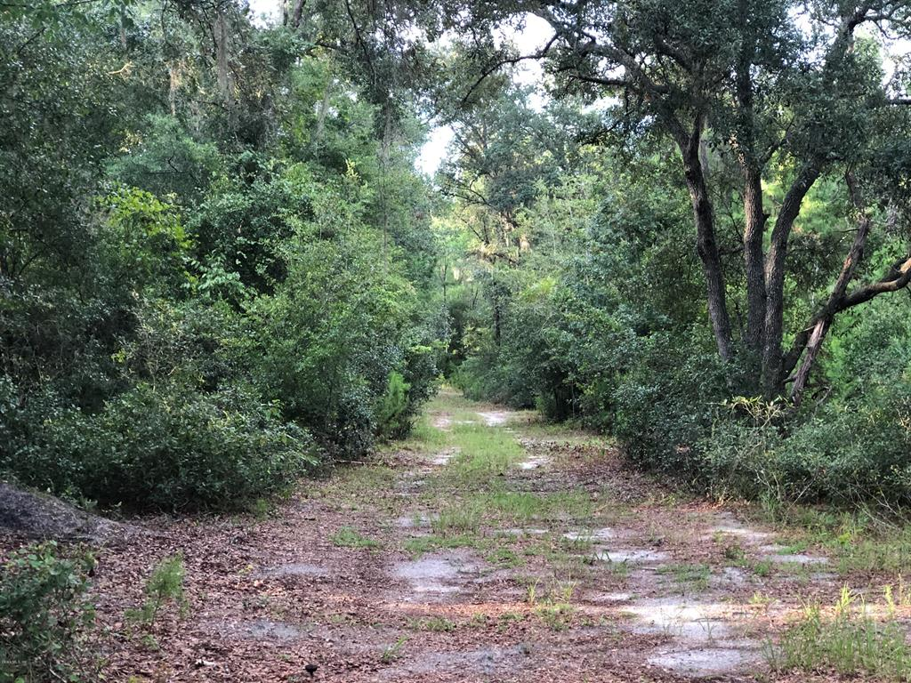 0 NE 212th Street ROAD Property Photo - FORT MCCOY, FL real estate listing