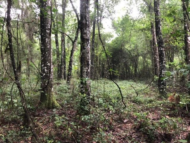 110 SE WACAHOOTA RD Property Photo - MICANOPY, FL real estate listing