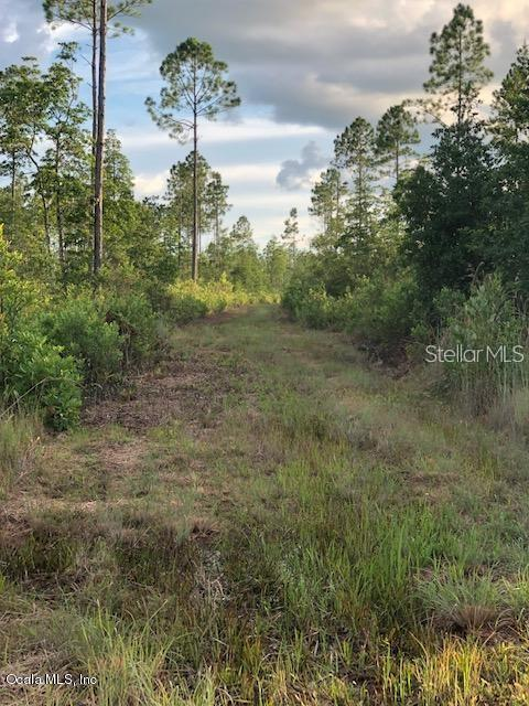 NE 212TH AVENUE Property Photo - FORT MC COY, FL real estate listing