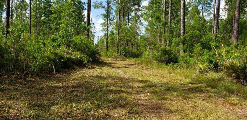 0 NE 212TH STREET ROAD Property Photo - FORT MC COY, FL real estate listing