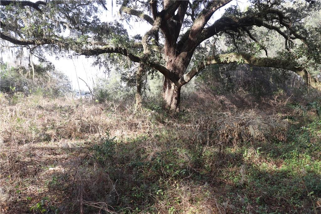 1220 N US HIGHWAY 41 Property Photo - DUNNELLON, FL real estate listing