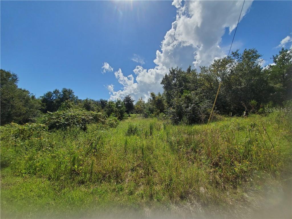 NE 96TH STREET Property Photo - SALT SPRINGS, FL real estate listing