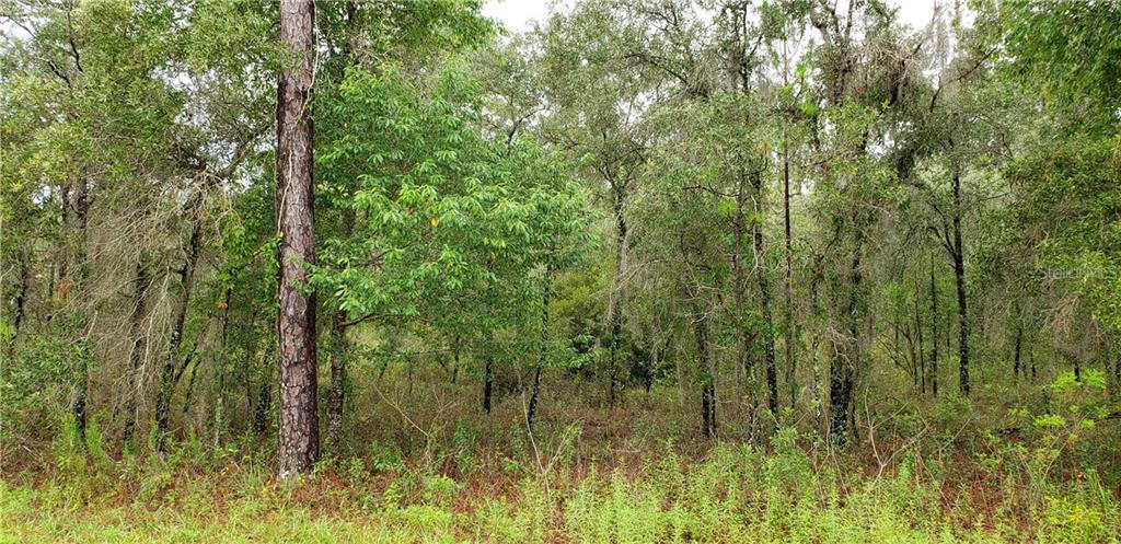 Lot 11 NE 105TH AVENUE Property Photo - ARCHER, FL real estate listing