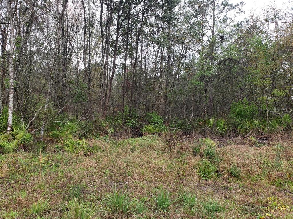 0 NE 91ST LANE Property Photo - WALDO, FL real estate listing