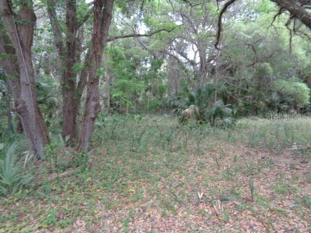 0 E COUNTY RD 325 Property Photo - CROSS CREEK, FL real estate listing