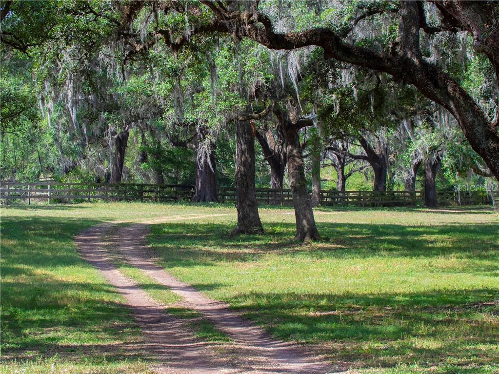 187TH LANE Property Photo - REDDICK, FL real estate listing
