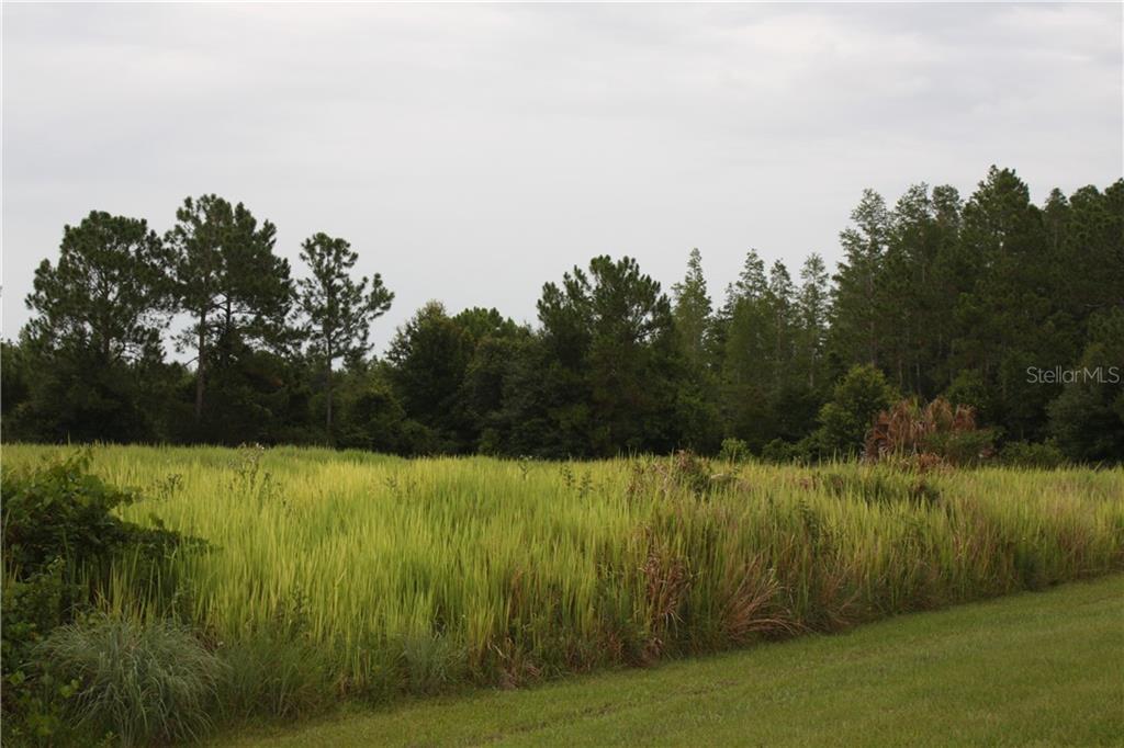 Tall Pine Property Photo