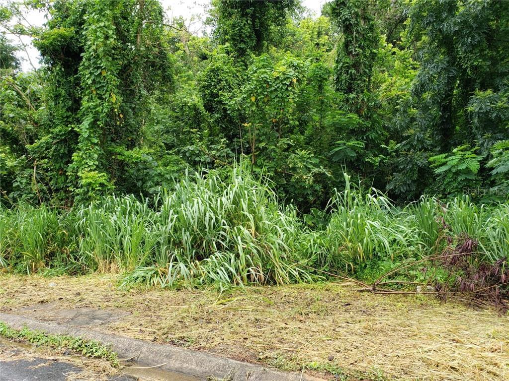 Carr 659 NW LOS BLOISES BYP NW Property Photo - DORADO, PR real estate listing