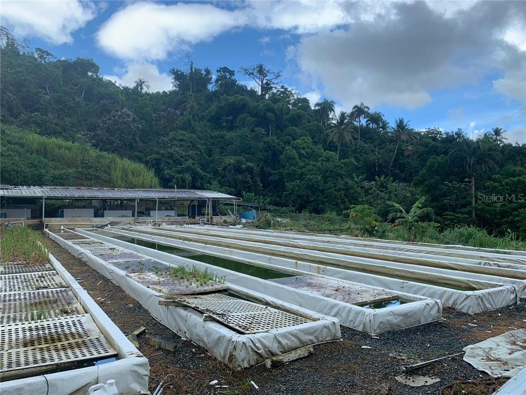 PR 799 km 26.7 CAMINO CONCEPCION Property Photo - SAN JUAN, PR real estate listing