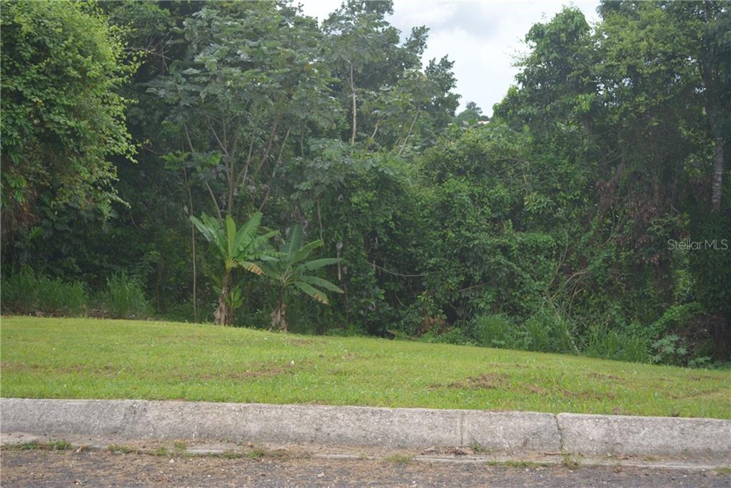 CARR 149 KM 19.5 INT BO. PESAS #1 Property Photo - CIALES, PR real estate listing
