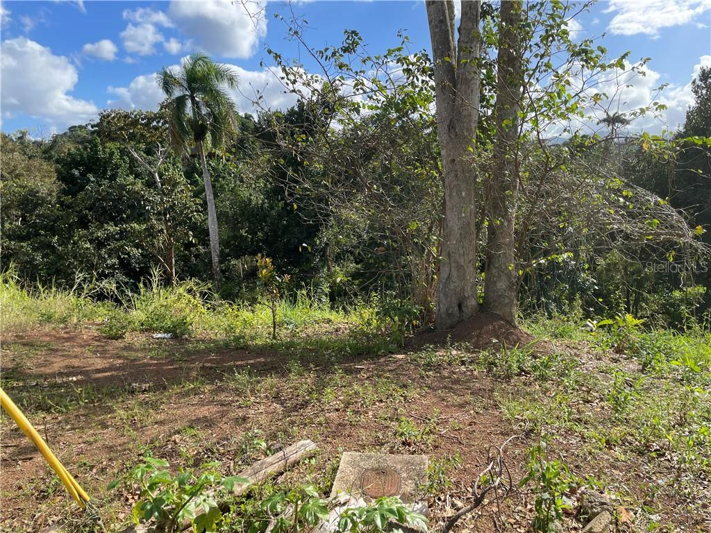 CARR 149 KM 19.5 INT BO. PESAS #9 Property Photo - CIALES, PR real estate listing