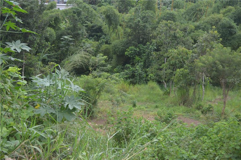 Carr 149 Km 19.5 Int Bo. Pesas #remanente Property Photo