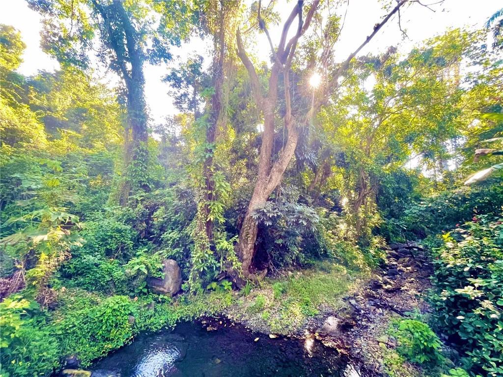 LOTE E QUEBRADA HONDA Property Photo - GUAYANILLA, PR real estate listing
