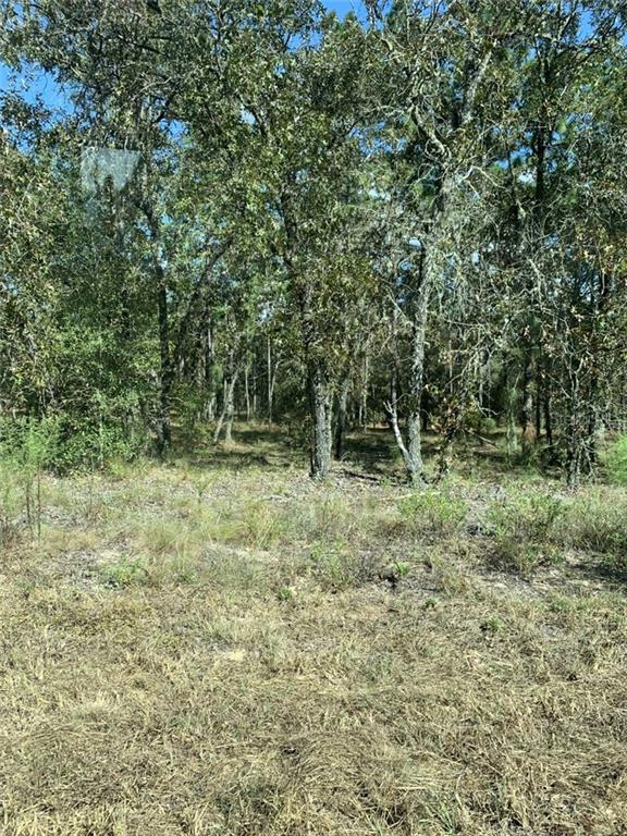229 PARADISE BLVD Property Photo - GEORGETOWN, FL real estate listing