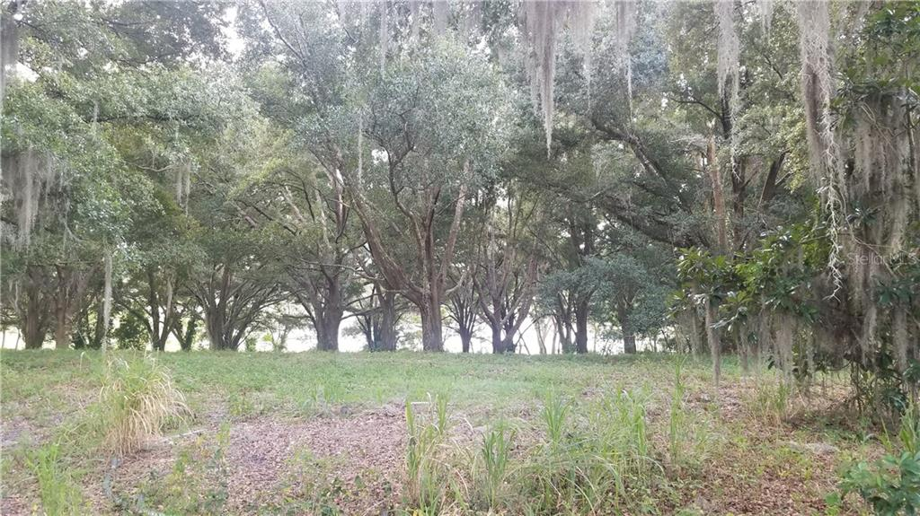 2005 LAKE FISCHER COVE LN Property Photo - GOTHA, FL real estate listing