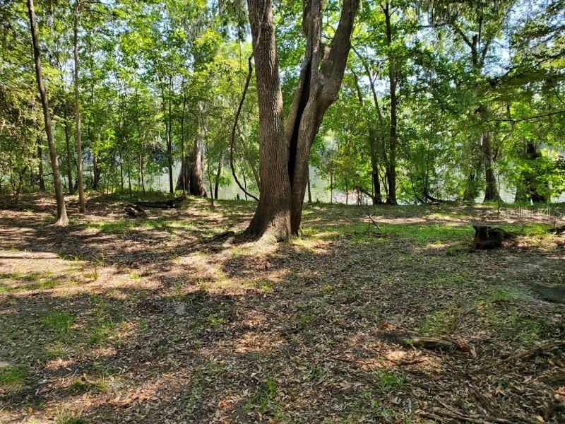 UNASSIGNED Property Photo - OLD TOWN, FL real estate listing