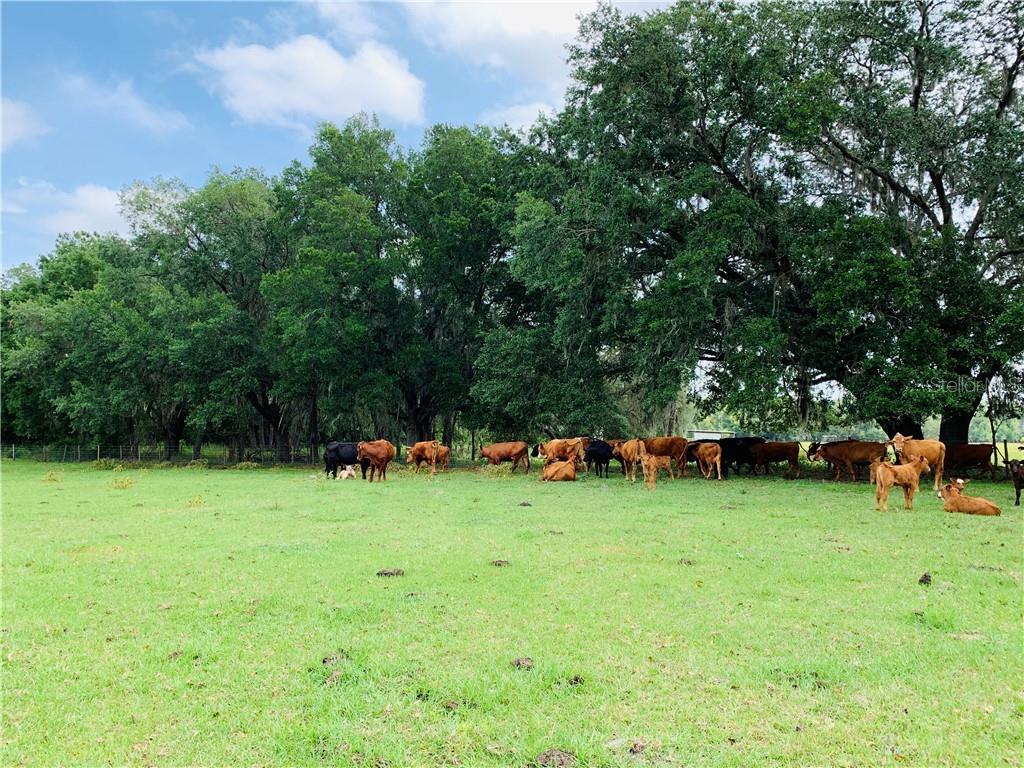 0 CR 739 Property Photo - WEBSTER, FL real estate listing