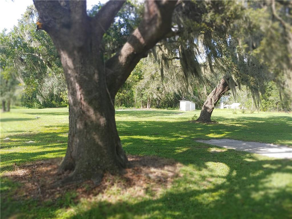 6904 KINARD RD Property Photo - PLANT CITY, FL real estate listing