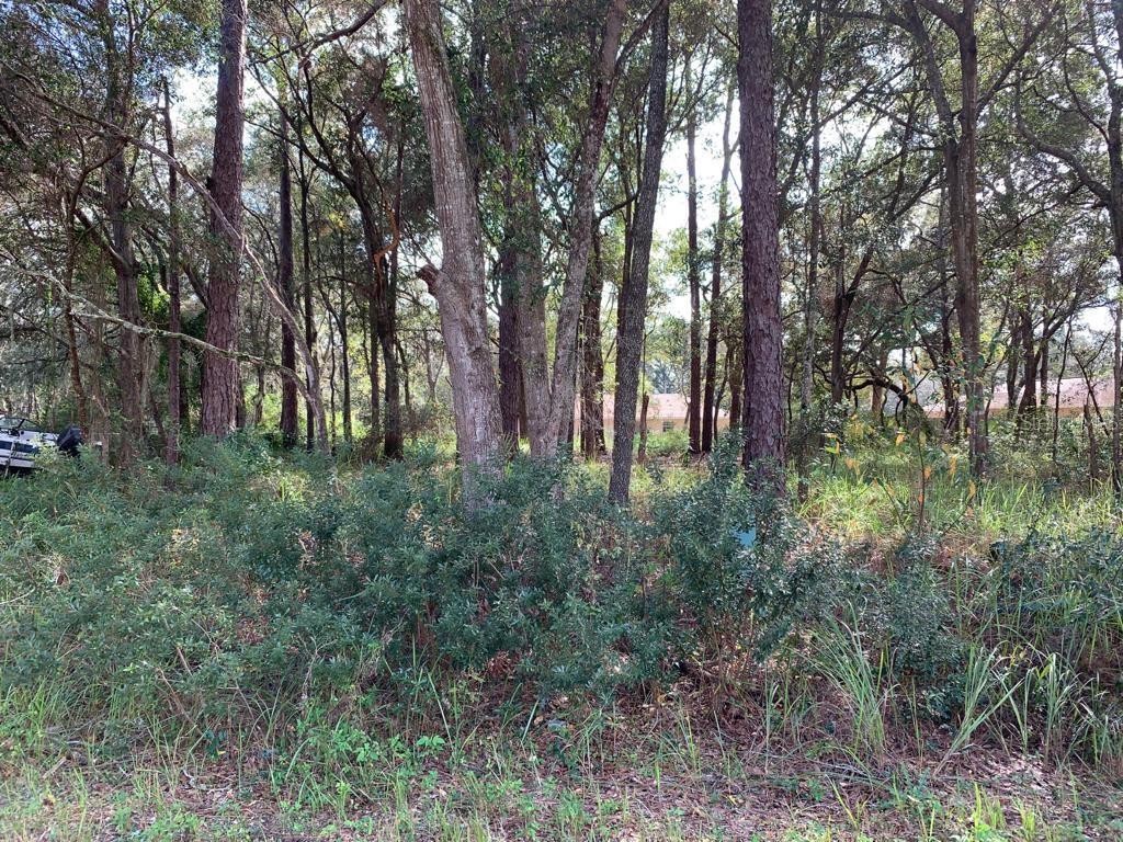 Cedar Trce Property Photo