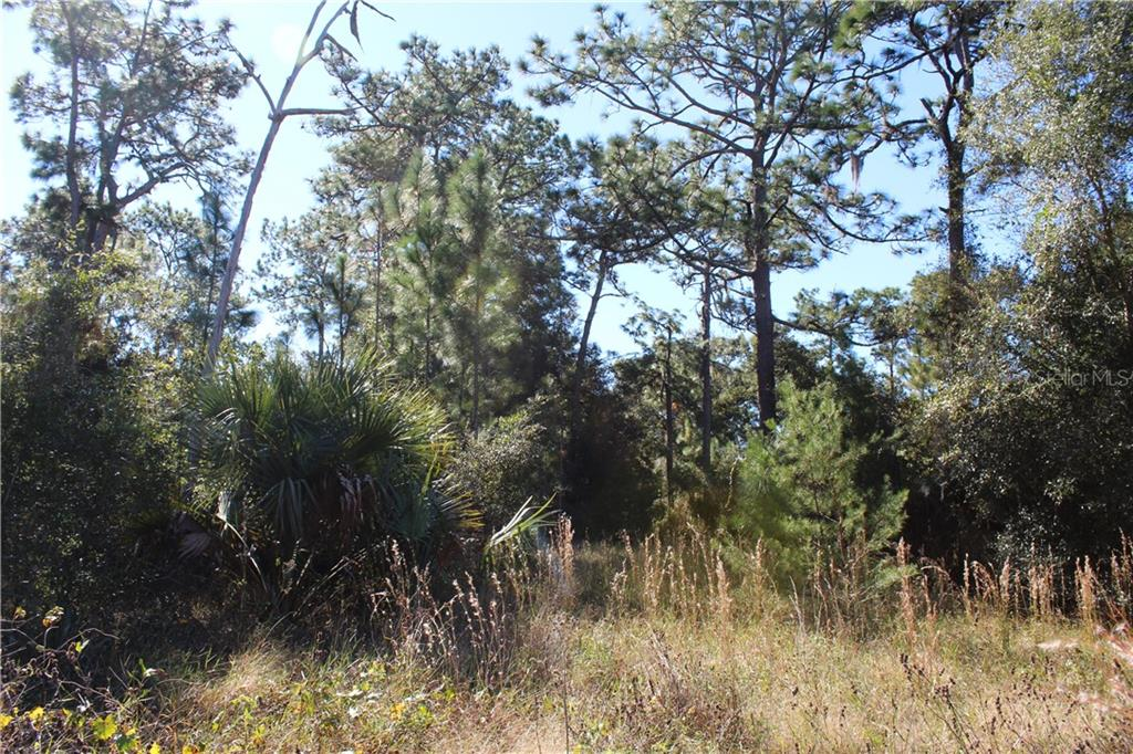DOYLE RD Property Photo - OSTEEN, FL real estate listing