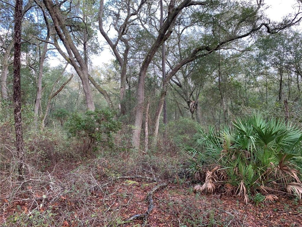 6155 STATE ROAD 11 Property Photo - DE LEON SPRINGS, FL real estate listing