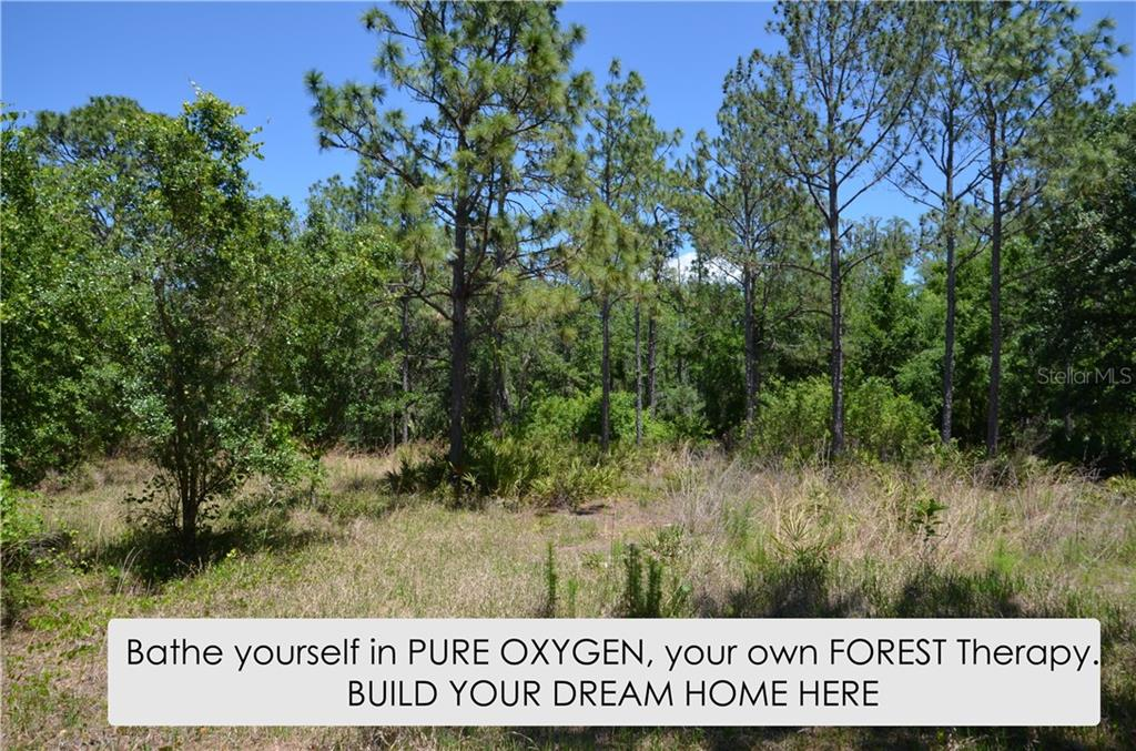 10875 Alico Pass Property Photo