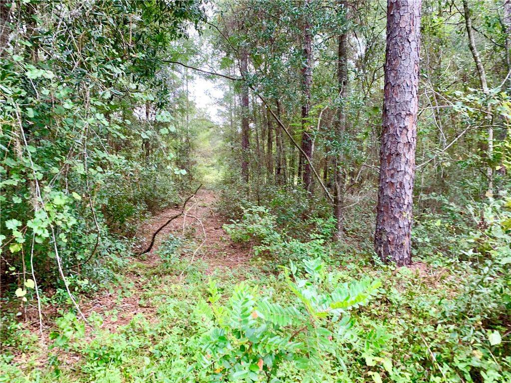 7019 E SHADY NOOK COURT Property Photo - FLORAL CITY, FL real estate listing