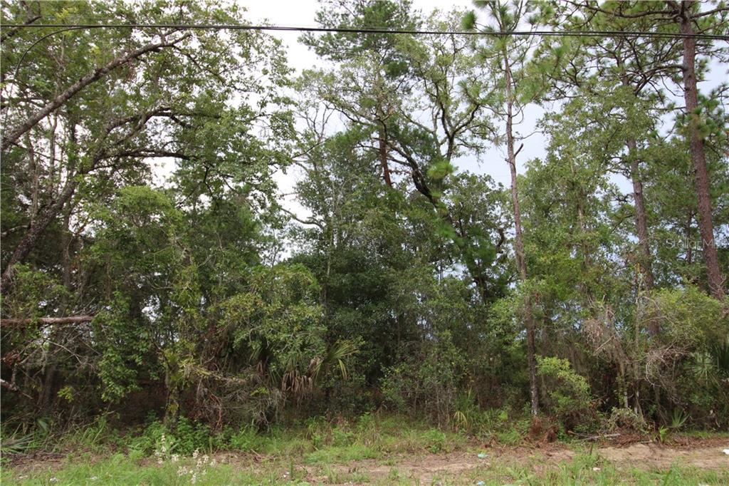 300 RIDGE ROAD Property Photo - SATSUMA, FL real estate listing
