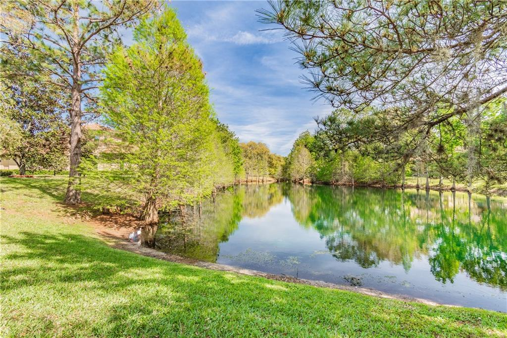 8510 N KENTUCKY DERBY DR Property Photo - ODESSA, FL real estate listing