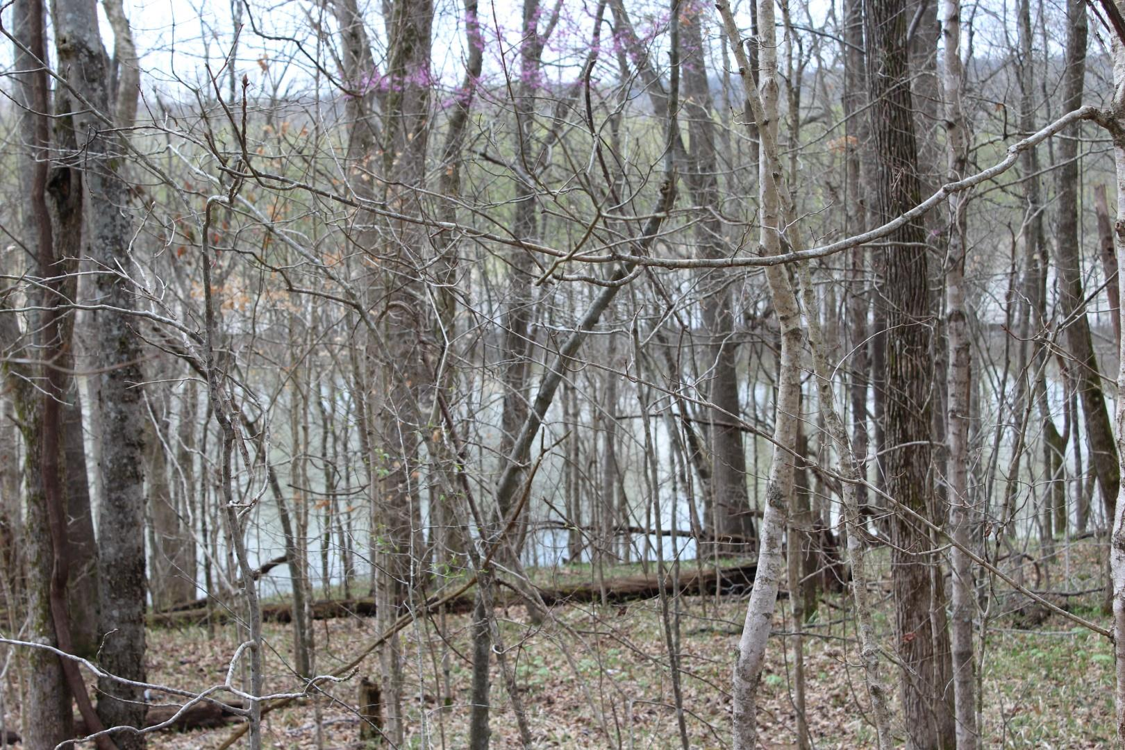 37 Patricia Circle, Indian Mound, TN 37079 - Indian Mound, TN real estate listing