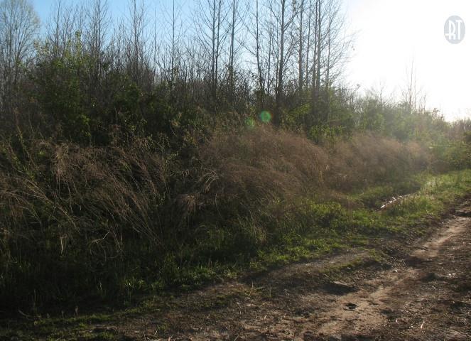 0 Lisa Cir, Indian Mound, TN 37079 - Indian Mound, TN real estate listing