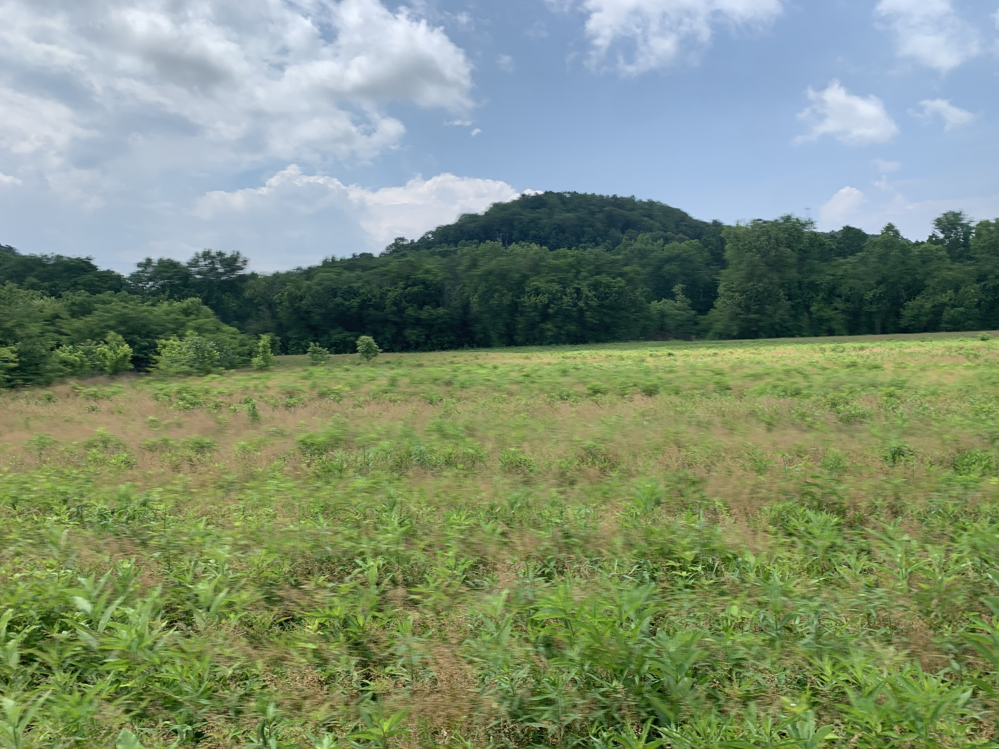 1345 Narrows Of The Harpeth Rd. Property Photo - Kingston Springs, TN real estate listing