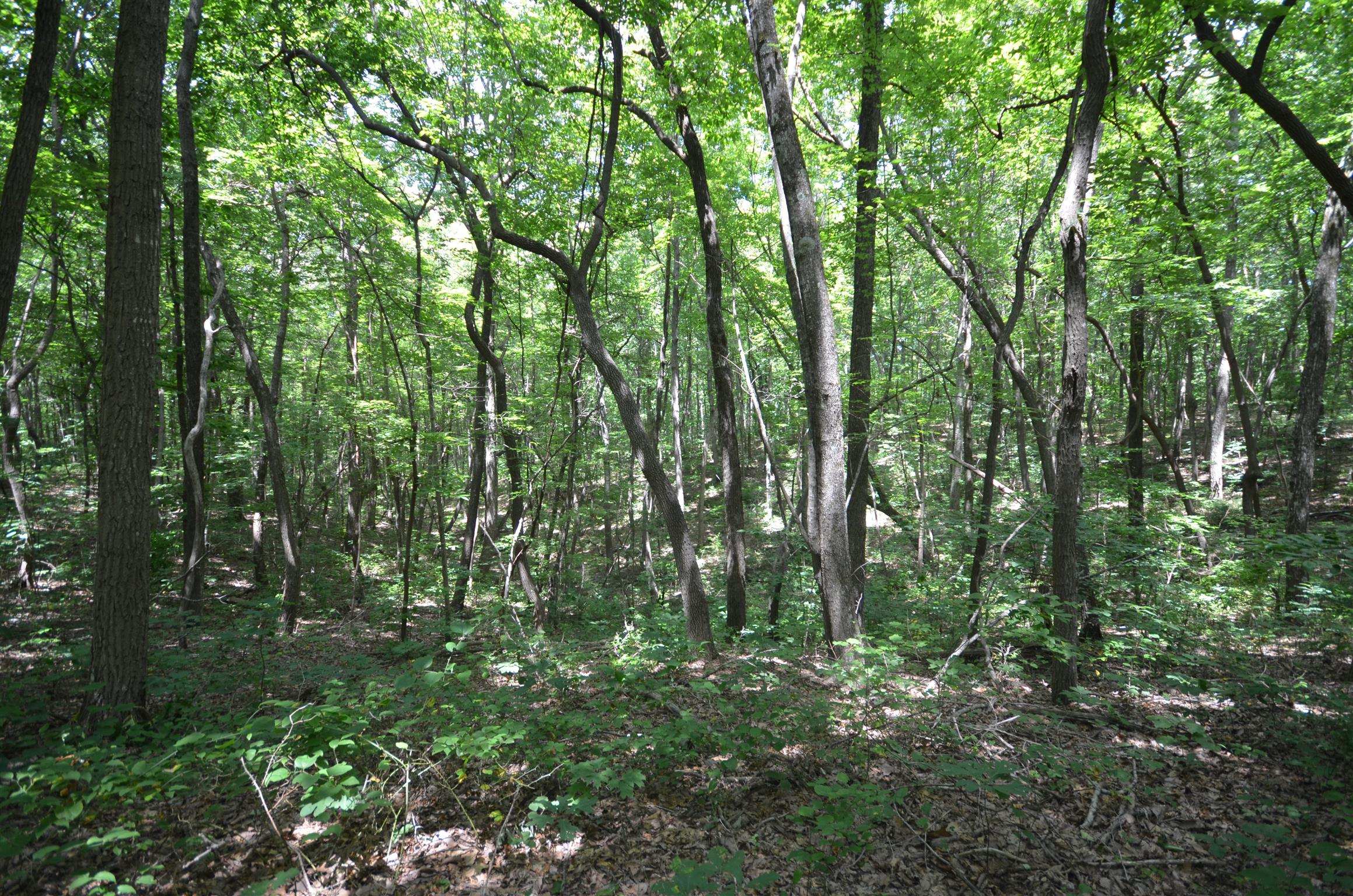 Blueberry Bluffs Lot 37 Real Estate Listings Main Image