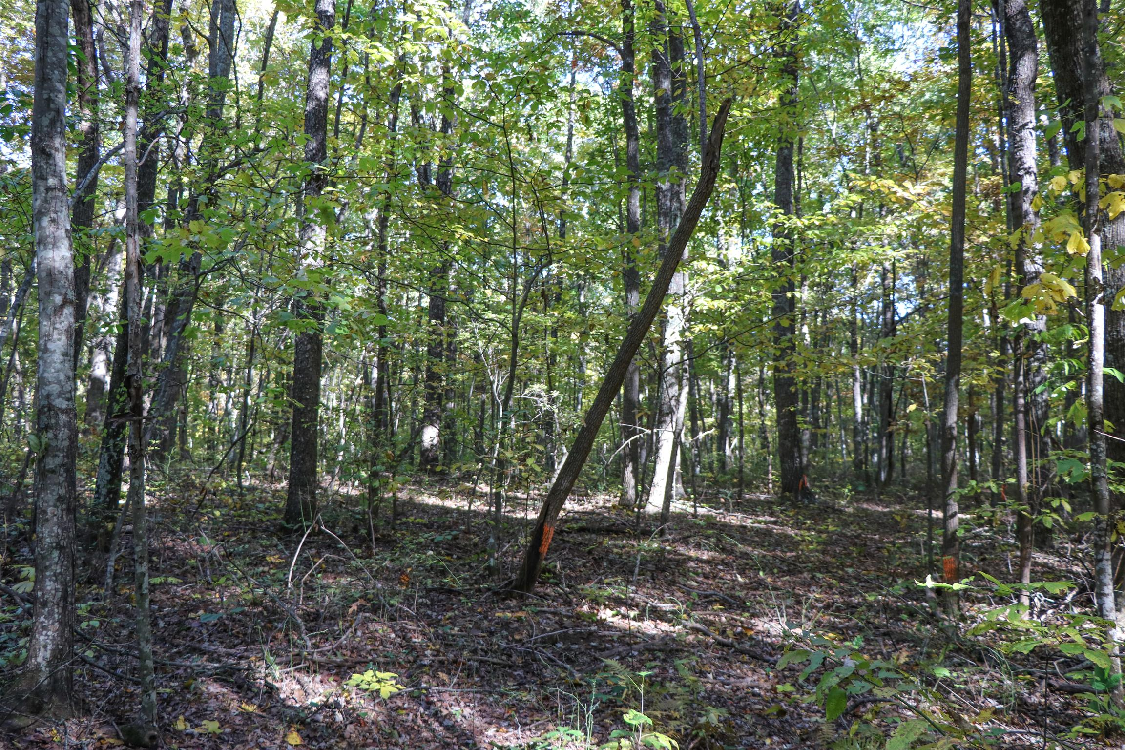 Blueberry Bluffs Lot 38 Real Estate Listings Main Image