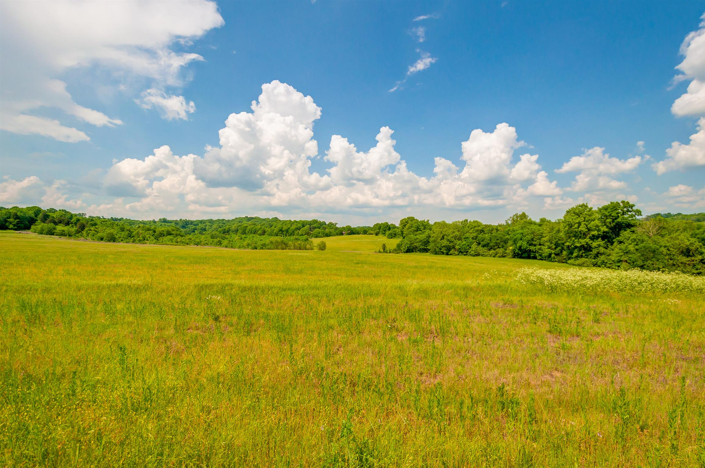 0 New Highway 7 Property Photo - Santa Fe, TN real estate listing