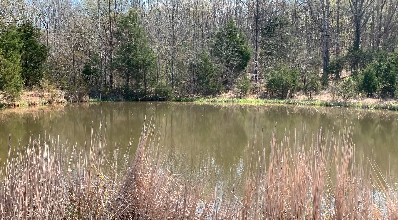 11225 Manchester Pike Property Photo - Christiana, TN real estate listing
