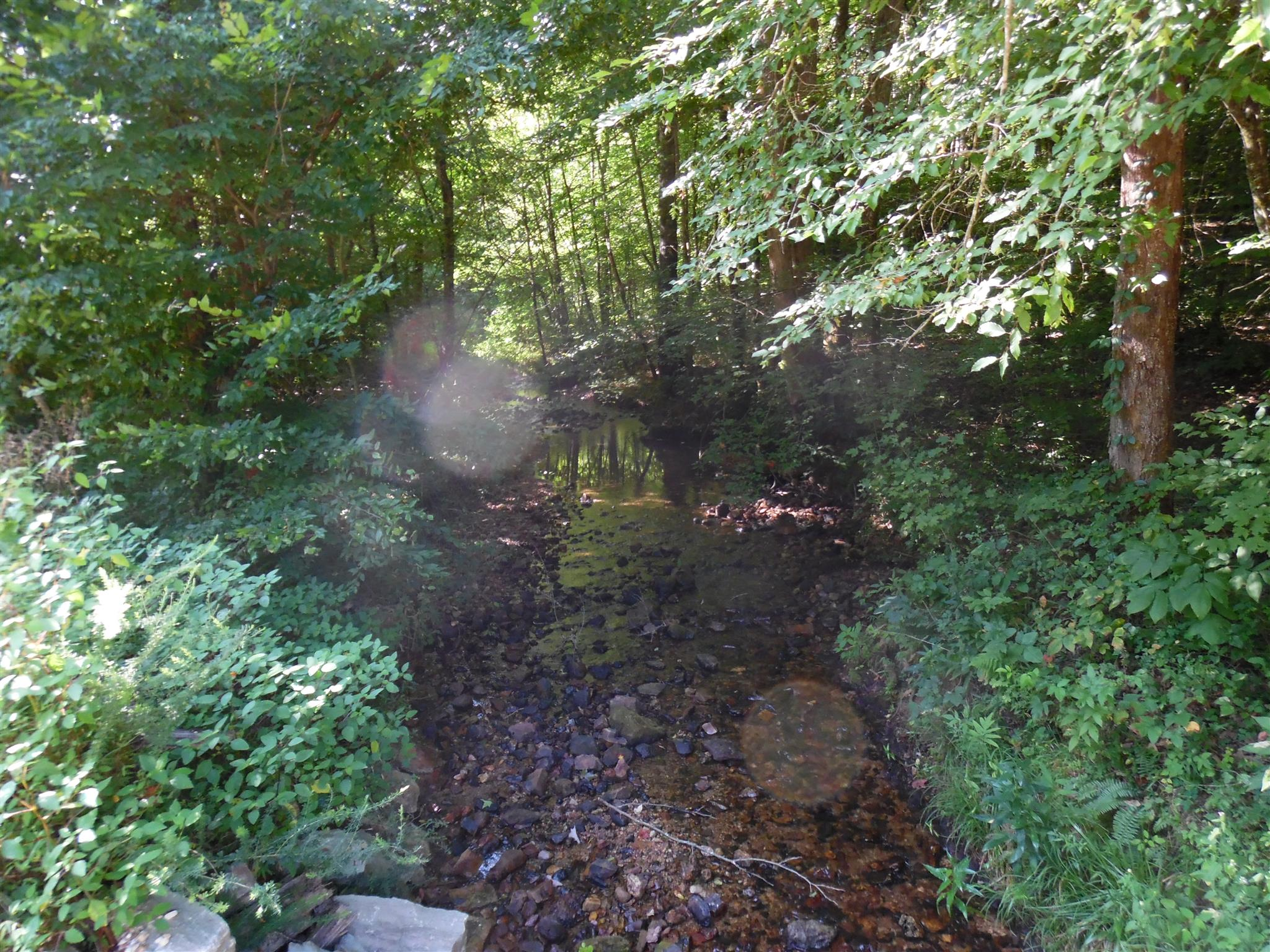 0 WATER FALL CREEK RD Property Photo - Collinwood, TN real estate listing