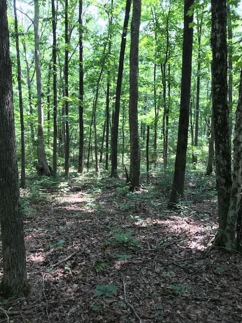 12 Roth Point Rd, Altamont, TN 37301 - Altamont, TN real estate listing