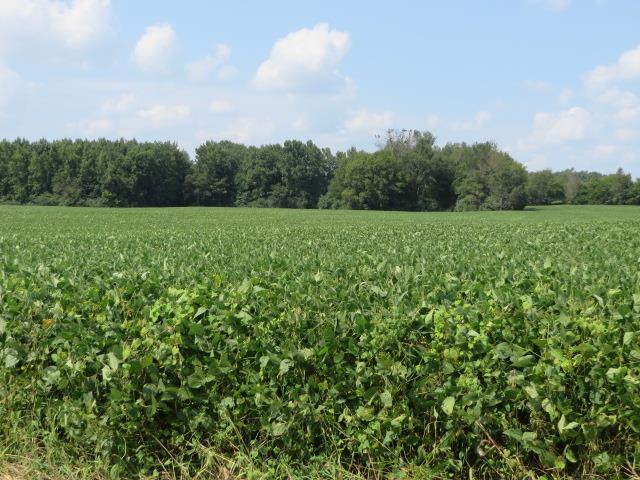 107 Childress Rd, Fayetteville, TN 37334 - Fayetteville, TN real estate listing